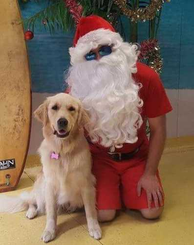 Pet Supersavers Santa Paws - Aussie style
