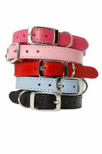 PLAIN JANE COLLARS AND LEADS