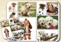 MOUSE PAD AND COASTER SET DOG LOVER